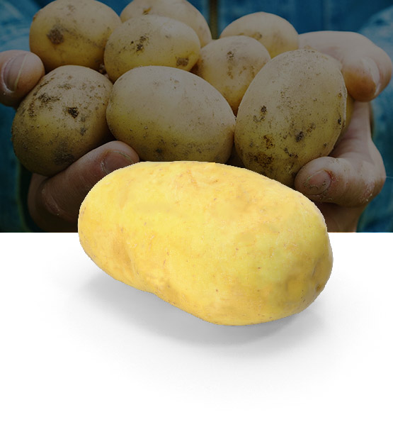 patate siliotto
